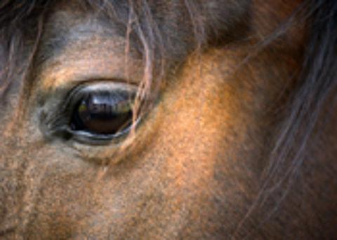Man aangehouden voor fraude met 'dode' paarden