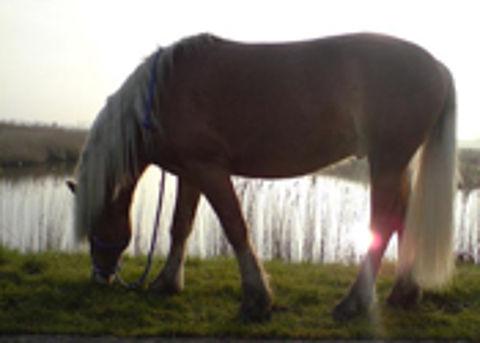 'Paardendame' laat oplichter aanhouden