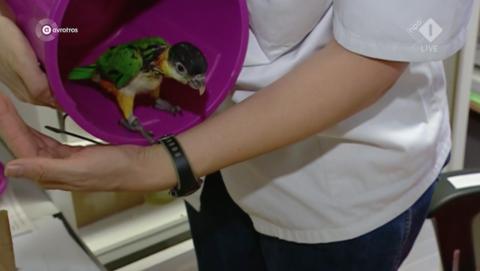 Dennis J. van Dennis Papegaaien krijgt voorwaardelijke celstraf voor illegale handel in geverfde papegaaien