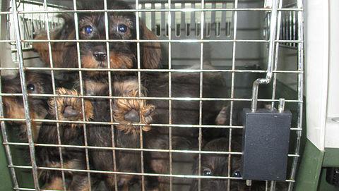 NVWA neemt 150 honden in bewaring bij Woerdense hondenhandelaar