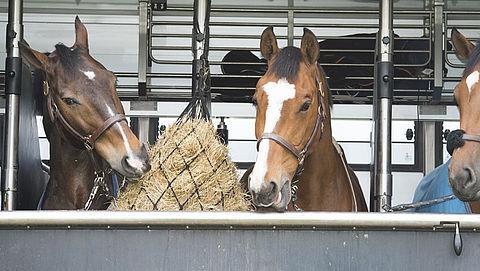 Paarden en vuurwapens in beslag genomen in witwaszaak