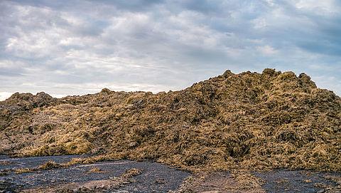 Politie houdt verdachten aan voor mestfraude met tientallen boeren