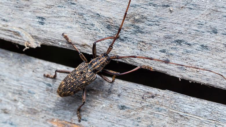 Pas op voor oplichters met smoes over insectenplaag
