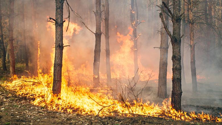 Brandweer Sicilië stichtte zelf brand om geld te verdienen