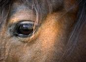 NVWA verliest rechtszaak rond fraude met paardenvlees
