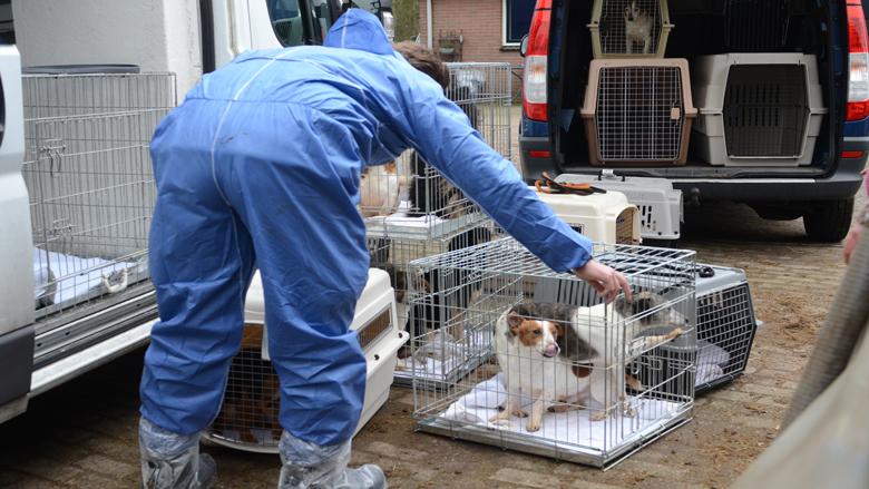 Dierenbescherming haalt honderd honden weg bij Deventerse broodfokker