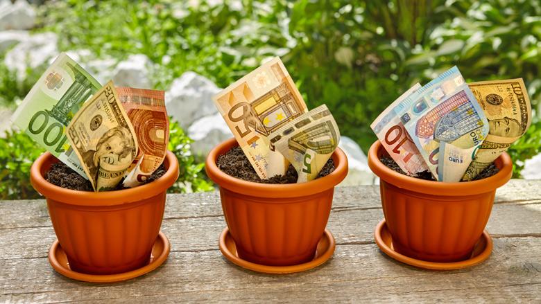 FIOD vindt 15.000 euro in bloempot