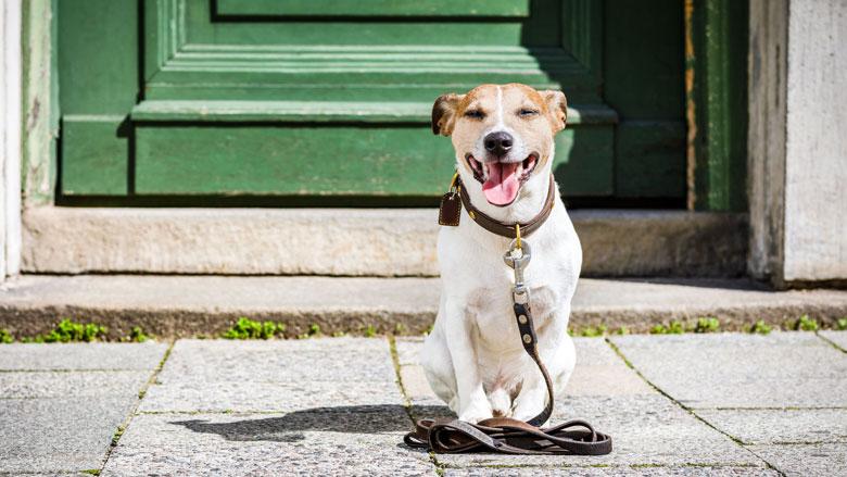 Oplichter laat hond los in huis slachtoffer