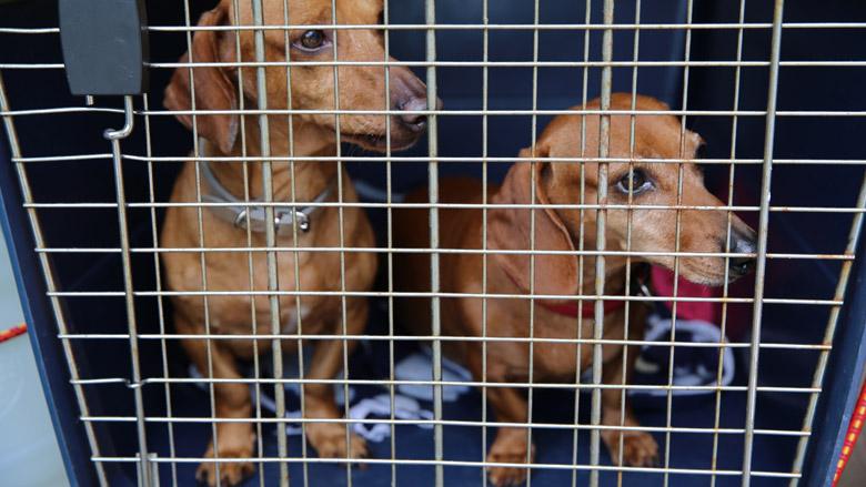 Politie neemt 120 honden in beslag bij kennels in Woerden