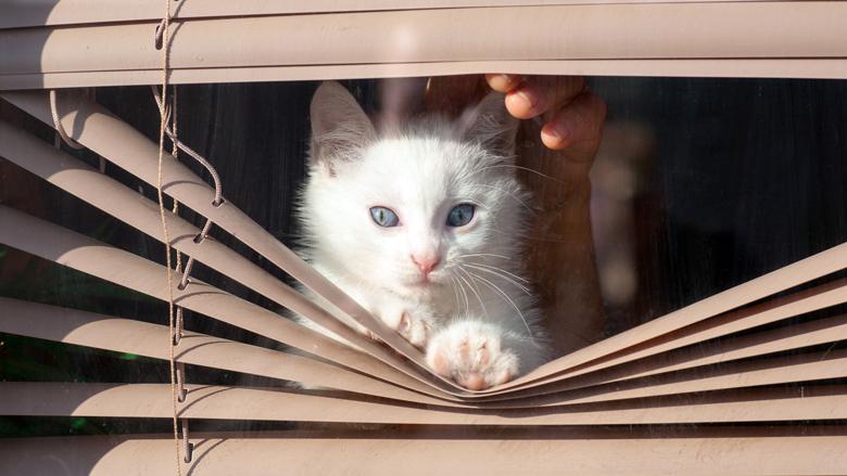 Babbeltruc: 'op zoek naar mijn kat'