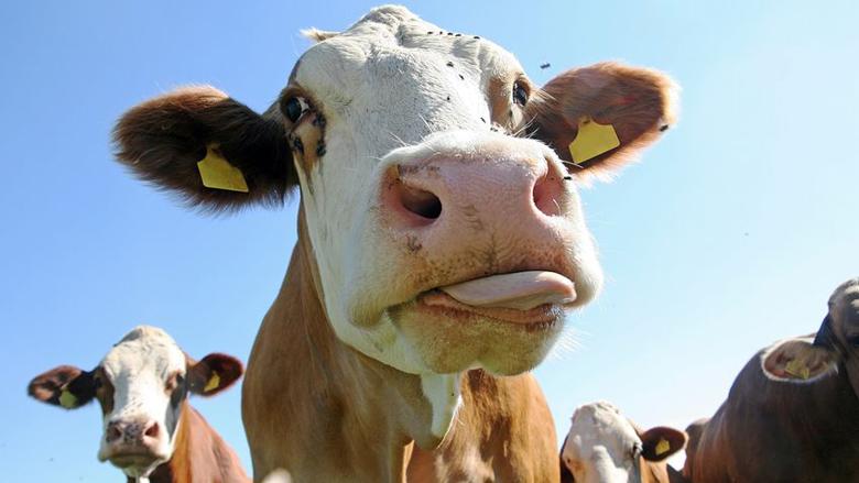 Verdachten vleesschandaal ontkennen beschuldigingen