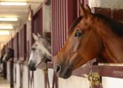 Celstraffen voor fraude met paardenpaspoorten