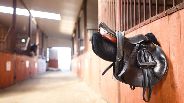 Marestables: leugens, bedrog en bedreigingen in de paardenwereld