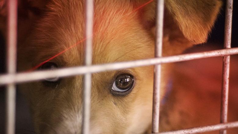 Zeven vragen over illegale hondenfokkers