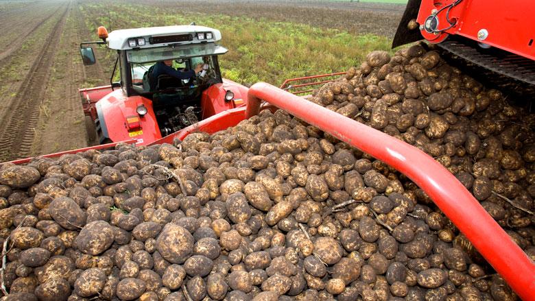 'Aardappel- en uienhandelaren vatbaar voor witwassen'