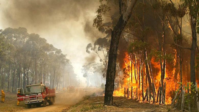 Australische autoriteiten slaan alarm over oplichting rondom verwoestende natuurbranden