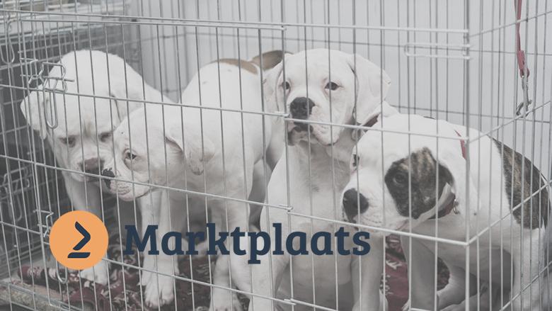 Marktplaats faciliteert malafide puppyhandel van broodfokkers: 'Gezonde pup vinden is moeilijk'